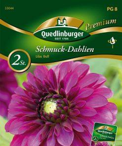 """Schmuck Dahlien /""""Seattle/""""  Blumenzwiebeln Quedlinburger Premium"""